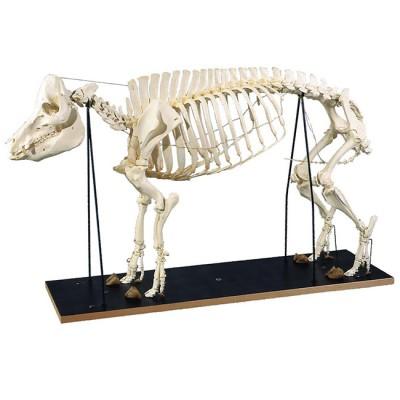 Esqueleto de Porco