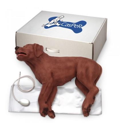 Cão Casper para CPR